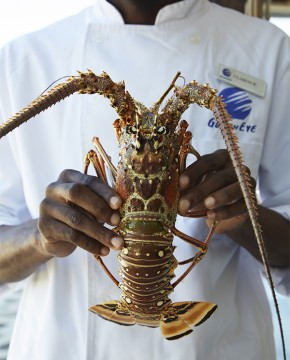 Goldeneye Resort: Chef Clarence Holds Lobster